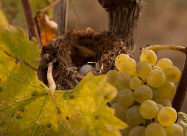 Foon Estate Vineyards